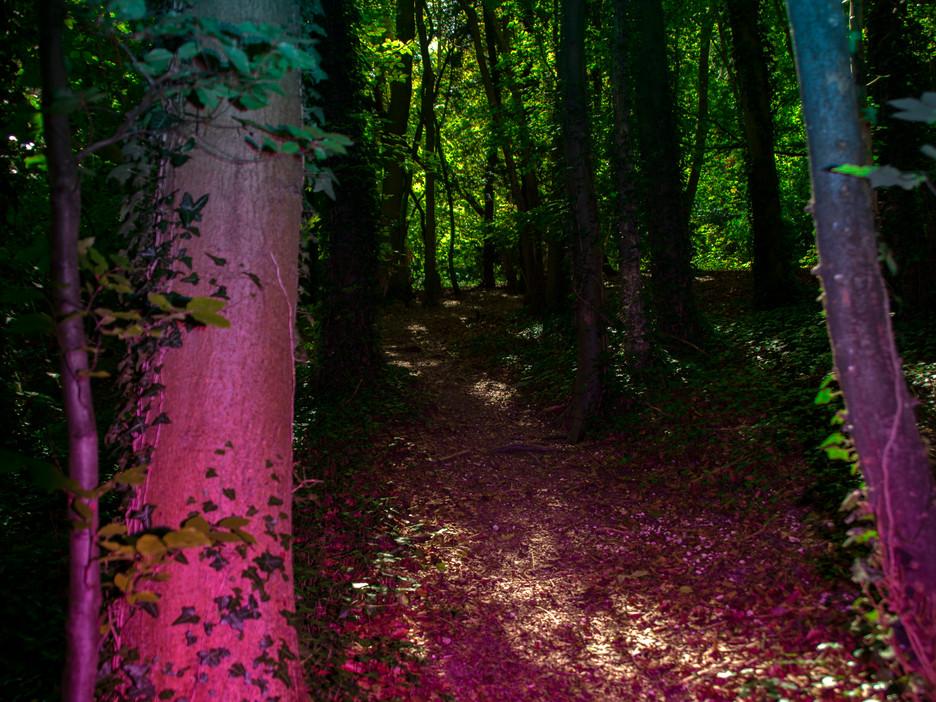 Friston Forest,2019