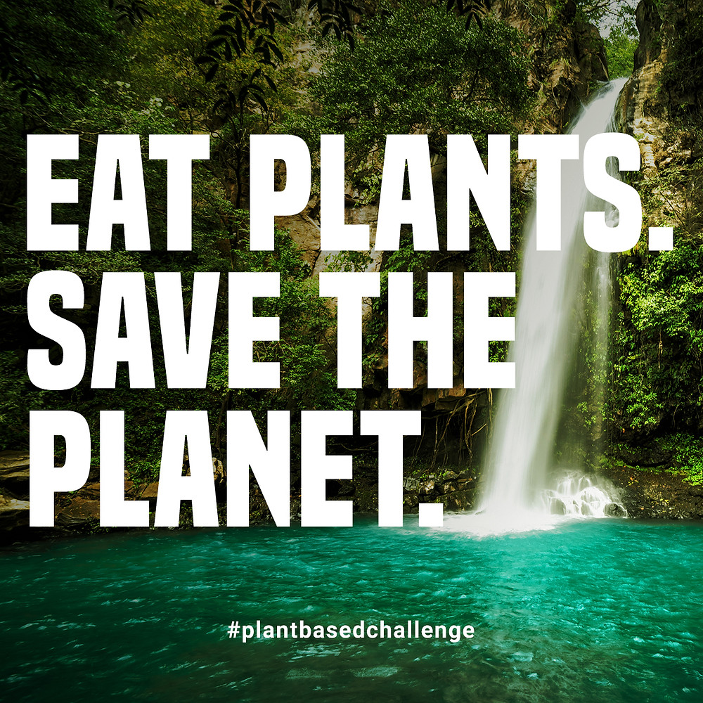 Food Matters 10 Day Plant-Based Challenge