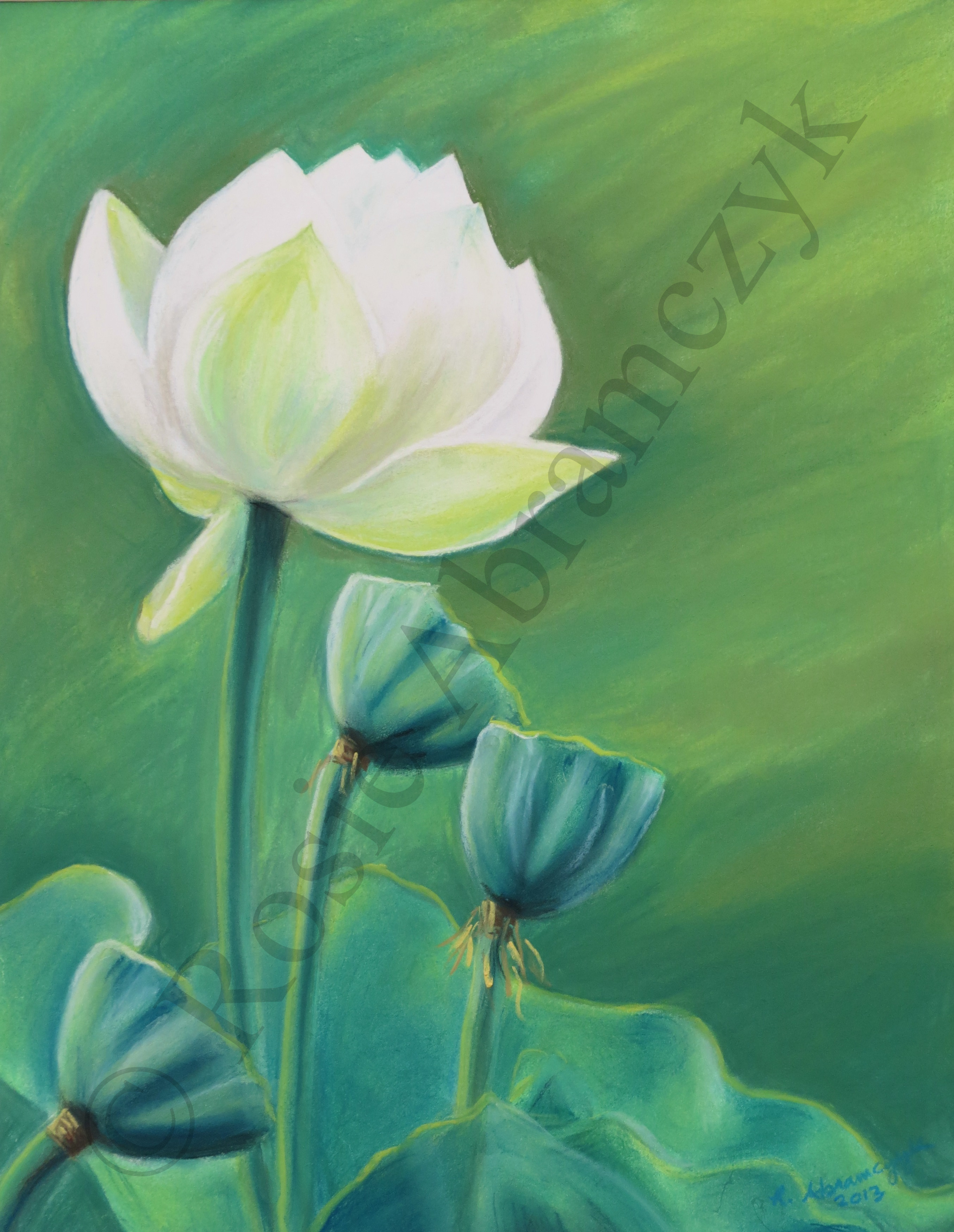 Lotus Flowers at Francis Park, by Rosie Abramczyk, Chalk Pastel, 2013
