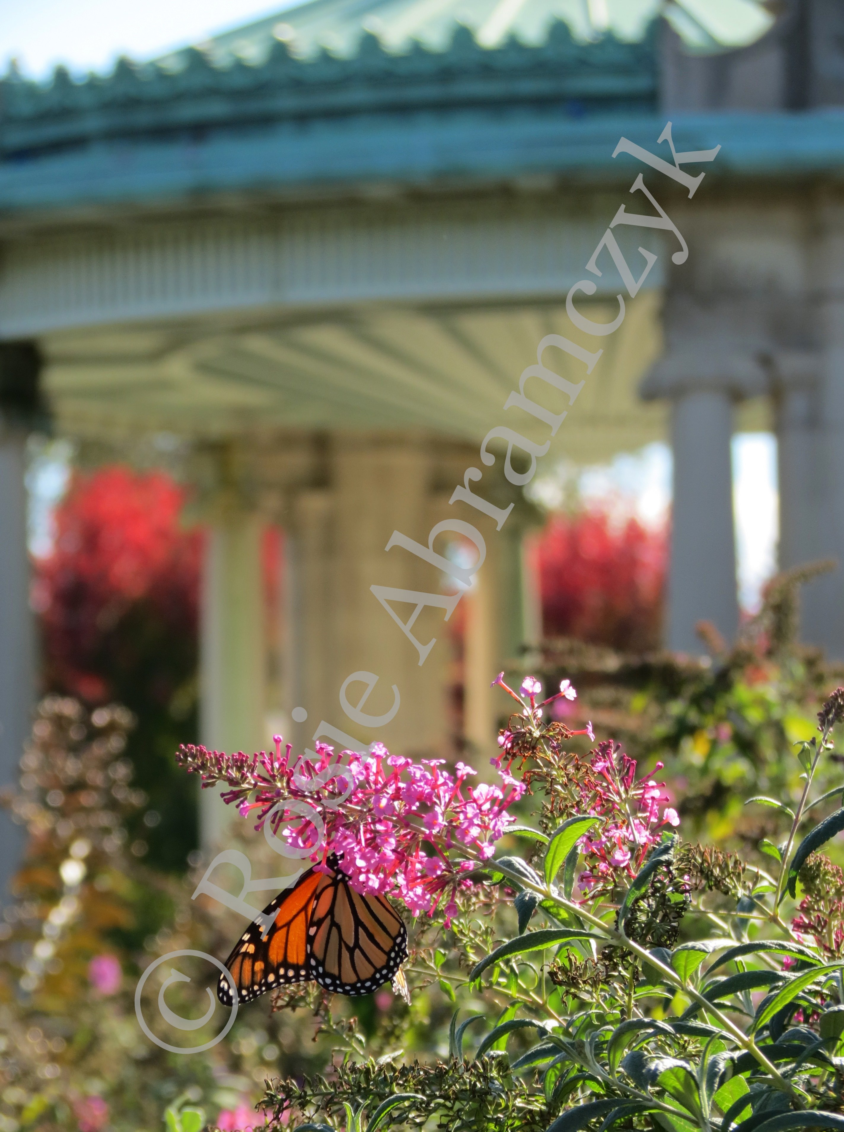 Butterfly at the Nathan Frank Bandstand Near the Muny, Rosie Abramczyk, 2013