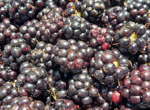 Wiled blackberry lesson