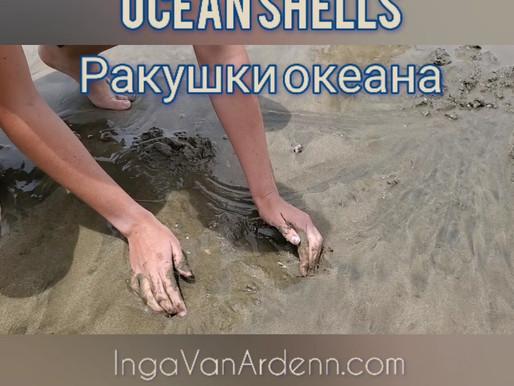 Ocean shells