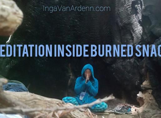 Meditation inside burned snag