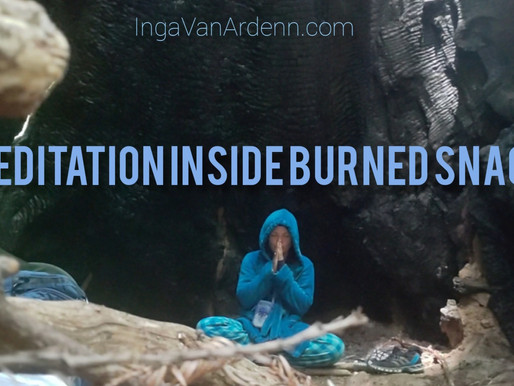 Meditation inside burned snag