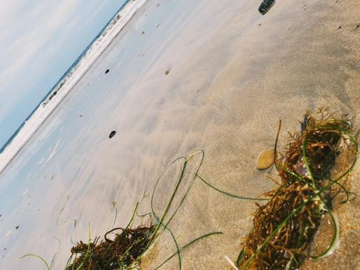 On the ocean beach