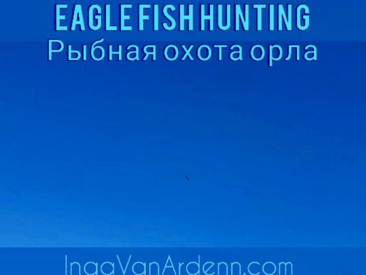 Eagle fish hunting
