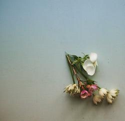 fond-d-ecran-fleurs