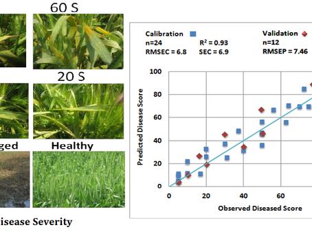 Assessing Wheat Yellow Rust Disease through Hyperspectral Remote Sensing