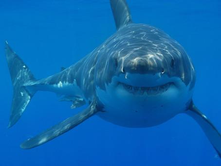 Shark Encounters: Tips for Safe Paddling