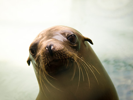 Save Our Sea Lions: Part One