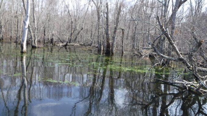 hudson river, the great swamp, hudson highlander, paddlexaminer