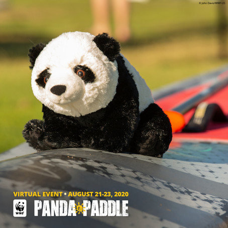Get on board with nature: Virtual 'Panda Paddle' provides a way to connect with nature