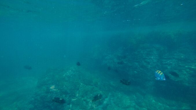 snorkeling, punta mita, mexico, paddlexaminer, wildmex coral island snorkeling
