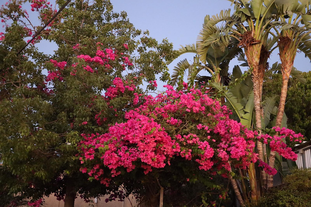 desert blossoming like the garden of the Lord