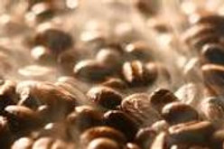 Organic Fair Trade Ethiopian Sidamo