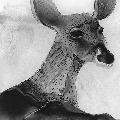 Deer image for postcard ED5.jpg