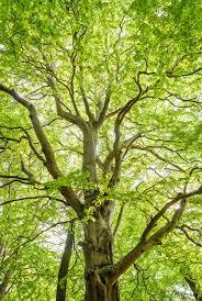 arbre v.png