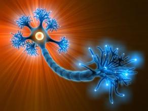Les neurosciences au service de la performance humaine