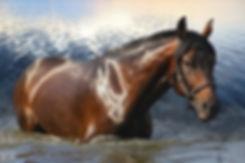 horse in water_edited.jpg