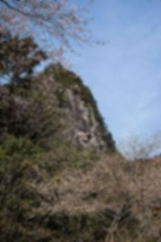 kumanozakura02.jpg