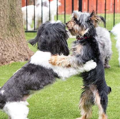 katy dog groomer small dog cinco ranch