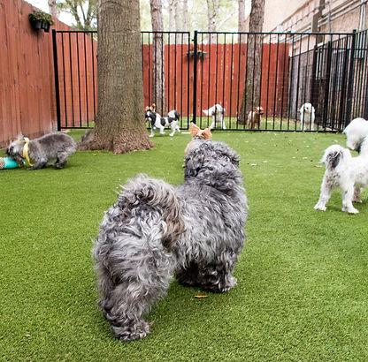 small dog park groomer katy cinco ranch