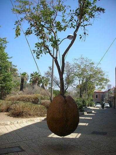 Висящее дерево в Яффо