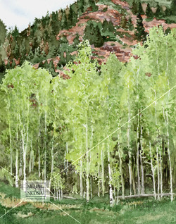 Spring Aspens against a Permian   Maroon Ascent watermark