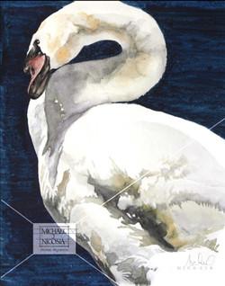 Dark Water Swan