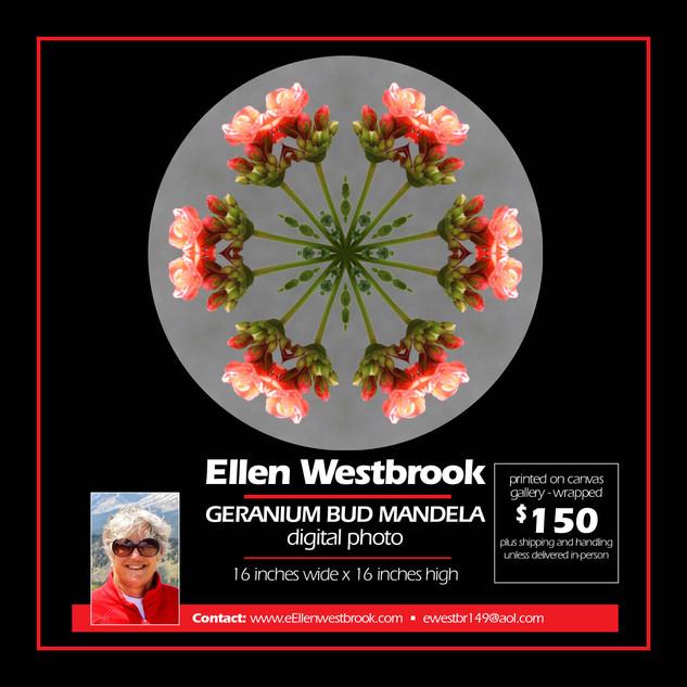 Ellen Westbrook