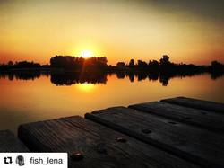 #Repost _fish_lena with _repostapp_・・・__kambodjasu #рыба #fishka #творидобробро _Доброе утро, #Сарат