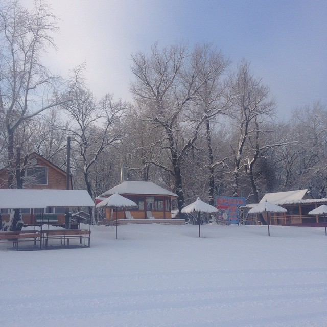 #турбаза #Турбазакамбоджа #елка #природа #праздник #зима #снег #саратов #энгельс #шумейка #камбоджа
