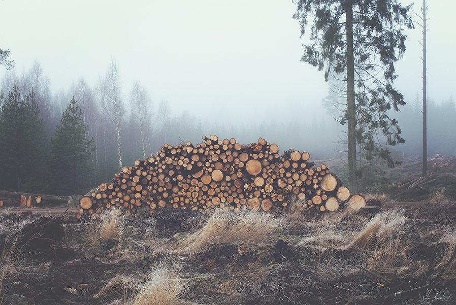 Tronchi accatastati in legno