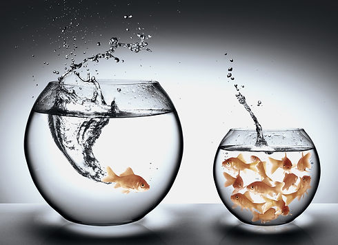 Two fish bowls as visual representation to define the difference of marketing and branding