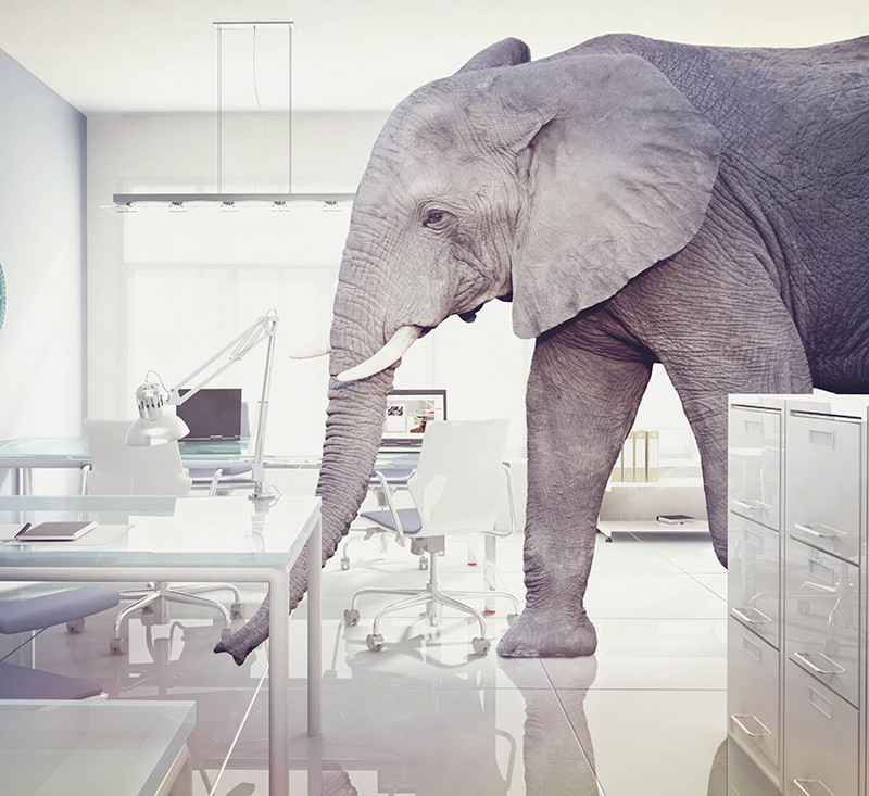 Visual representation of elephant in the room