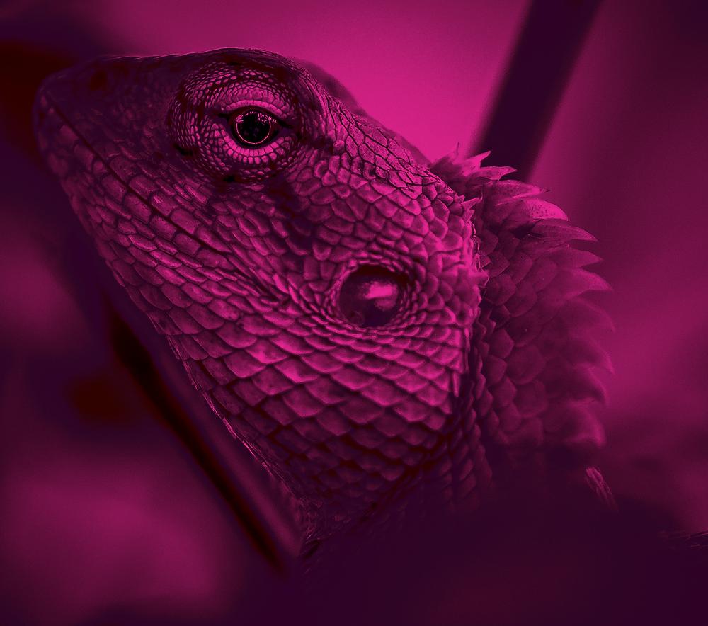 Lizard head background in pink shade