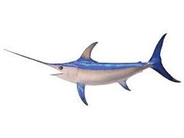 swordfish image(flip).jpg