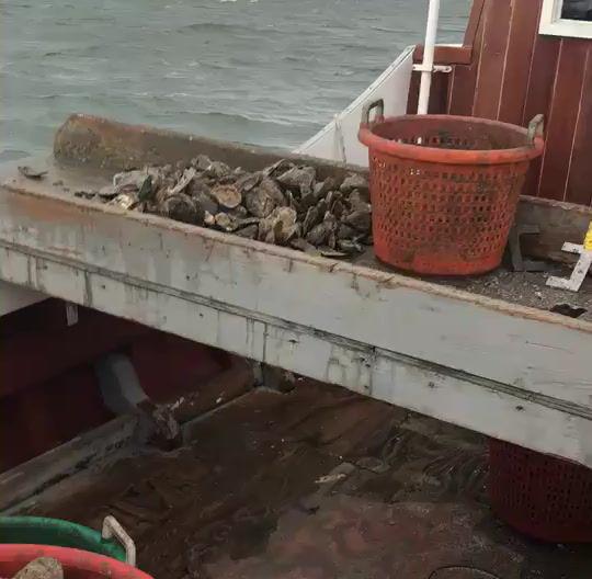 Oystering with Captin Tony