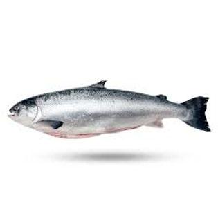 scottish salmon image.jpg