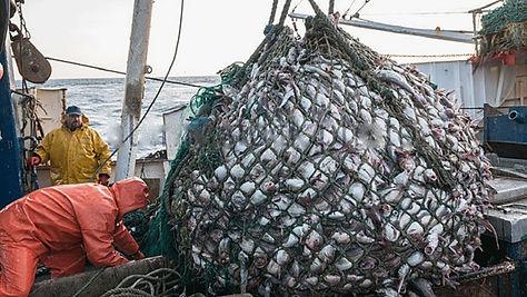 fishing net image.jpg