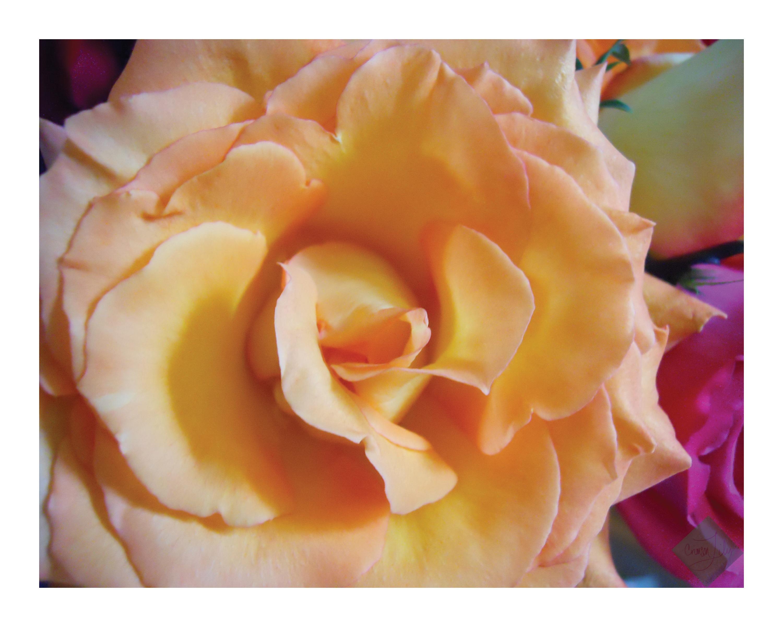 Flore del Sol