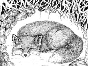 FOX ASLEEP IN DEN