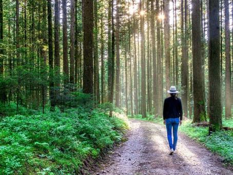 Acepta la travesía: las 5 etapas de la sostenibilidad corporativa