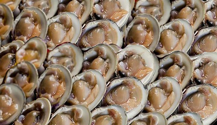 clams-on-half-shell 2.png