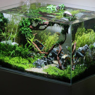 aquascaped tank