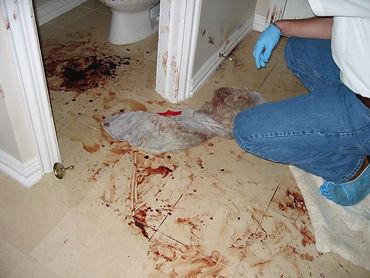 biohazard technician leaning down toward blood pool, bloody towels, blood droplets on tile