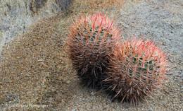 Cactus #10
