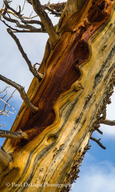 Wood #6