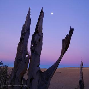 Bristlecone Pines #2
