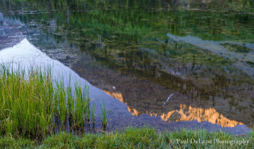 Reflections #5